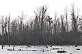 Laurentian Wetlands - Kitchener, Ontario 01.jpg