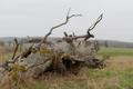 Lauterbach Frischborn Eisenbach Quercus Pastures Coarse woody debris Autumn Baronenweg E.png