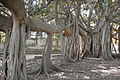 Le Jardin botanique de Palerme (6896299902).jpg