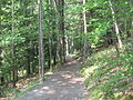 Leonard Harrison State Park Turkey Path 2.jpg