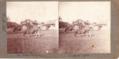 Les Vaches au prés 13 aout 1904.tif
