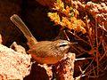 Les oiseaux de Siwa - panoramio (5).jpg
