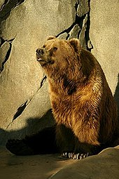 Kodiak bear - Wikipedia