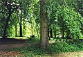 Lime trees at Thorp Perrow Arboretum - geograph.org.uk - 349909.jpg