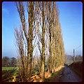 Line of trees - panoramio.jpg