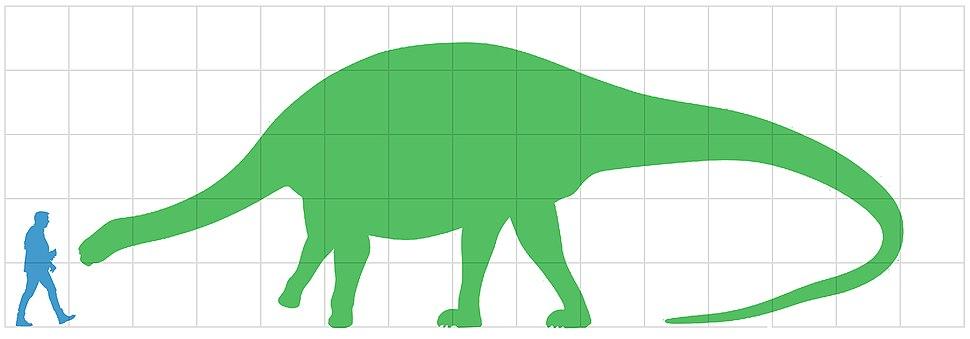 Lingwulong size diagram