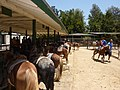 Los Angeles, CA, Griffith Park Pony Rides, On the Trail, 2010 - panoramio.jpg