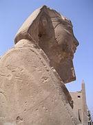 Louxor Sphinx.JPG