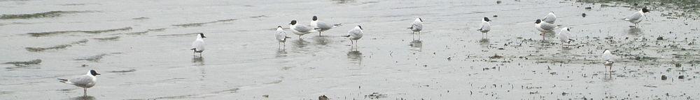 Lumpytrout Wikivoyage Page Banner Washington Puget Sound Birds.JPG