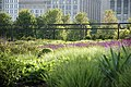 Lurie Garden west shoulder hedge and armature.jpg