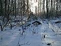 Lviv, forest on Suhiv - panoramio (3).jpg