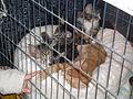 MTP Cat Show 2230004.JPG