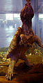 Macrochelys temminckii Genève 24102014 1.jpg