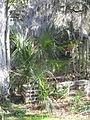 Magnolia Plantation and Gardens - Charleston, South Carolina (8555520741).jpg