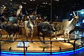 Mammal display - National Museum of Nature and Science, Tokyo - DSC07268.JPG