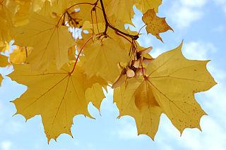 Listy - vyživovacie orgány rastlín