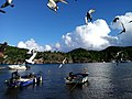 Marigot Terre-de-Haut Les Saintes.jpg