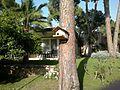 Maritim Pine Beach Hotel, Antalya.jpg
