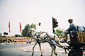 Marrakechhorse.jpg
