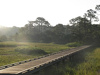 Hunting Island State Park - The Marsh Boardwalk at Hunting Island