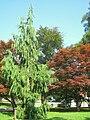 Marywood University Arboretum - 032.jpg