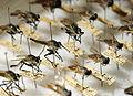 Medical entomology DVIDS276812.jpg