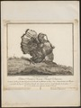 Meleagris gallopavo - 1767 - Print - Iconographia Zoologica - Special Collections University of Amsterdam - UBA01 IZ16900310.tif