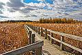 Mer Bleue Peat Bog, Ottawa, Ontario (8169736985).jpg