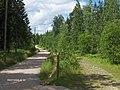 Metsätietä,Kivikko - panoramio.jpg