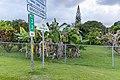 Mile 33 Hana Maui Hawaii (44827130845).jpg