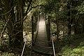 Minnamurra Rainforest - panoramio (1).jpg