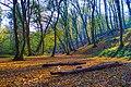 Mlada šuma.jpg