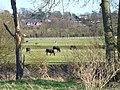 Moleside Meadows - geograph.org.uk - 687758.jpg