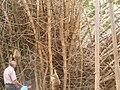 Monkeys of LALBAGH BOTANICAL AND ZOOLOGICAL GARDEN , BANGALORE , INDIA.jpg