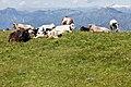 Monte Baldo - panoramio (2).jpg