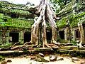 More Angkor Trees (1503334934).jpg