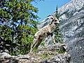 Mountain Sheep - Banff - panoramio.jpg