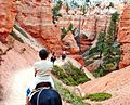 Mule Ride, Bryce Canyon 9-09 (24067185413).jpg