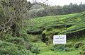 Munnar - views from Munnar (31).jpg