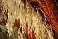 Muntanya de Sal de Cardona - 9.jpg