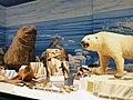 Musée zoologique de Strasbourg-Mondes polaires (2).jpg