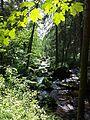 NÖ-Naturdenkmal ZT-121 Talabschnitt des Kleinen Kamp mit Schütt sl2.jpg