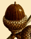 NAS-021f Quercus ilicifolia acorn.png