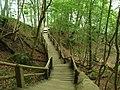 NP Jasmund, Königstuhl, svah k pobřeží, schody.JPG