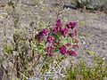NTS - Wild Flowers 018.jpg