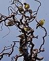National Aviary (13020027475).jpg
