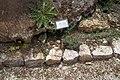National Botanic Garden of Israel 09.jpg