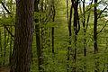 Nationalpark Eifel Waldblick.jpg