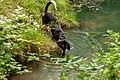 Naturbëschreservat «Beetebuerger Bësch»-108.jpg