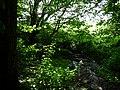Naturdenkmal Hasequelle Wellingholzhausen Melle -Im Hase Wald- Datei 2.jpg
